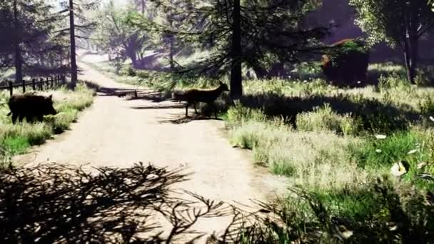Krásné slunné lesní se zvířaty, brzy na jaře