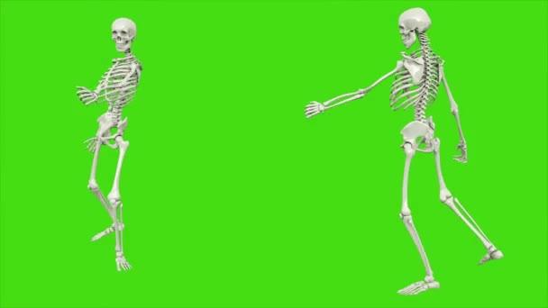 das Gehen eines betrunkenen Skeletts. nahtlose Schleifenanimation auf grünem Bildschirm.