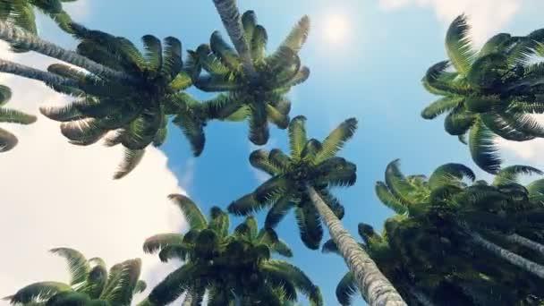 Jízdy přes palmy v zelené džungli