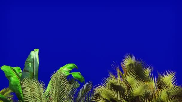 Tropical plant in the wind on blue screen. In 4k
