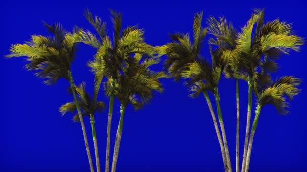 Palm trees in the wind on blue screen. Beautiful summer looped background.