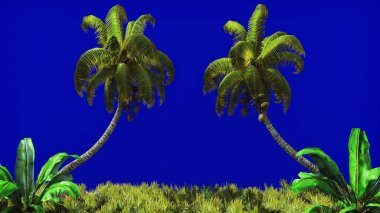 The branches of palm tree and Tropical plant in the wind on blue screen. Beautiful summer background. 3D Rendering
