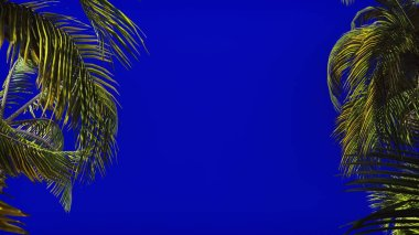 The branches of palm tree in the wind on blue screen. Beautiful summer background. 3D Rendering