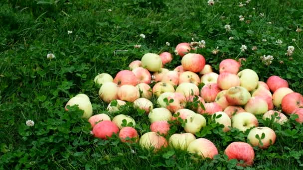 Red apples are scattered across the grass from a wooden basket in slow motion.