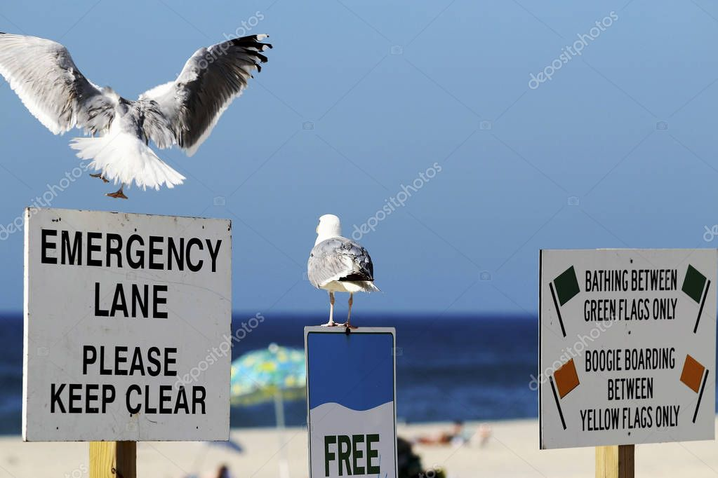 Seagull landing on an Emergency Lane Sign while another is on a free wi fi sign both looking at the ocean.