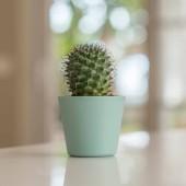 A táblázat otthon hatterrel napos bokeh dekoratív cactus