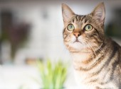 Fotografie Beautiful relaxed domestic cat at home
