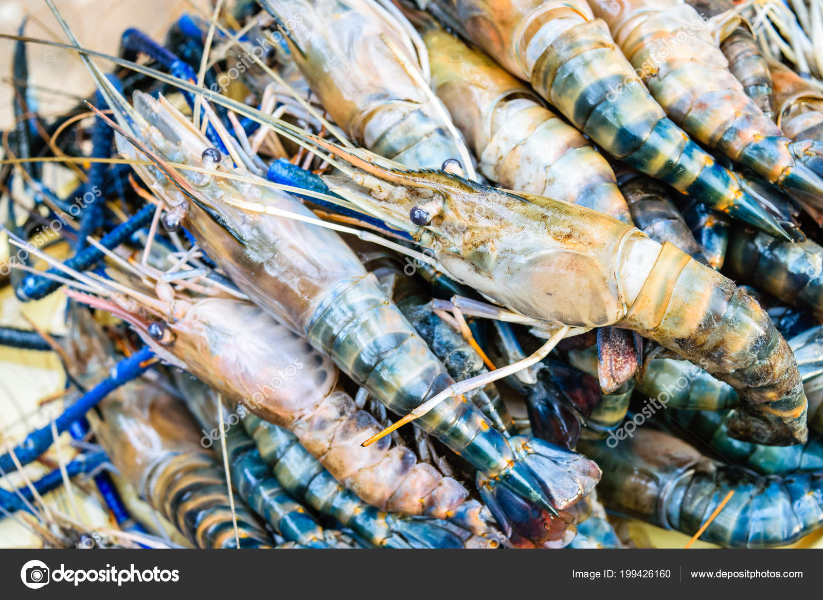 Images: shrimps and prawns | Fresh Shrimp Big Prawn — Stock