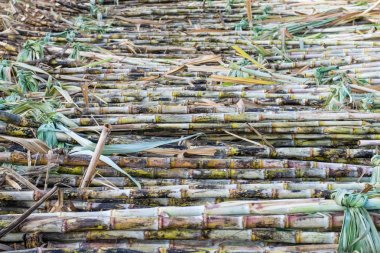 Harvested sugarcane fields