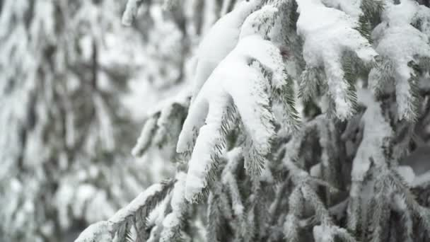 Close-up View of Winter Forest Landscape with Snowfall