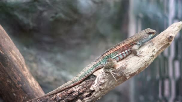 Podrobný pohled na ještěrku sedící na větvi