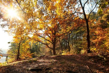 incredibly beautiful autumn forest landscape