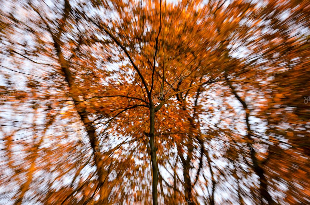 Abstract composition of a tree and blurry background in autumn. European forest during afternoon.