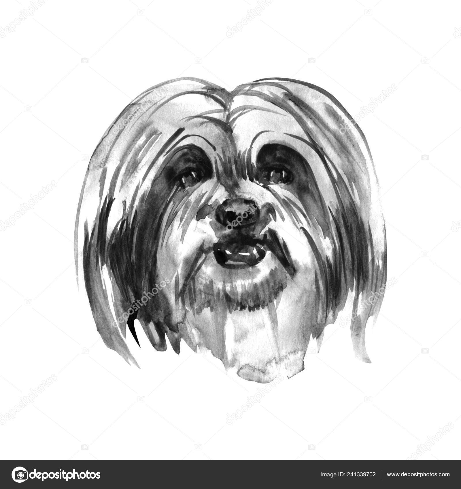 Lhasa Apso Hand Painted Isolated Watercolor Dog Stock Photo