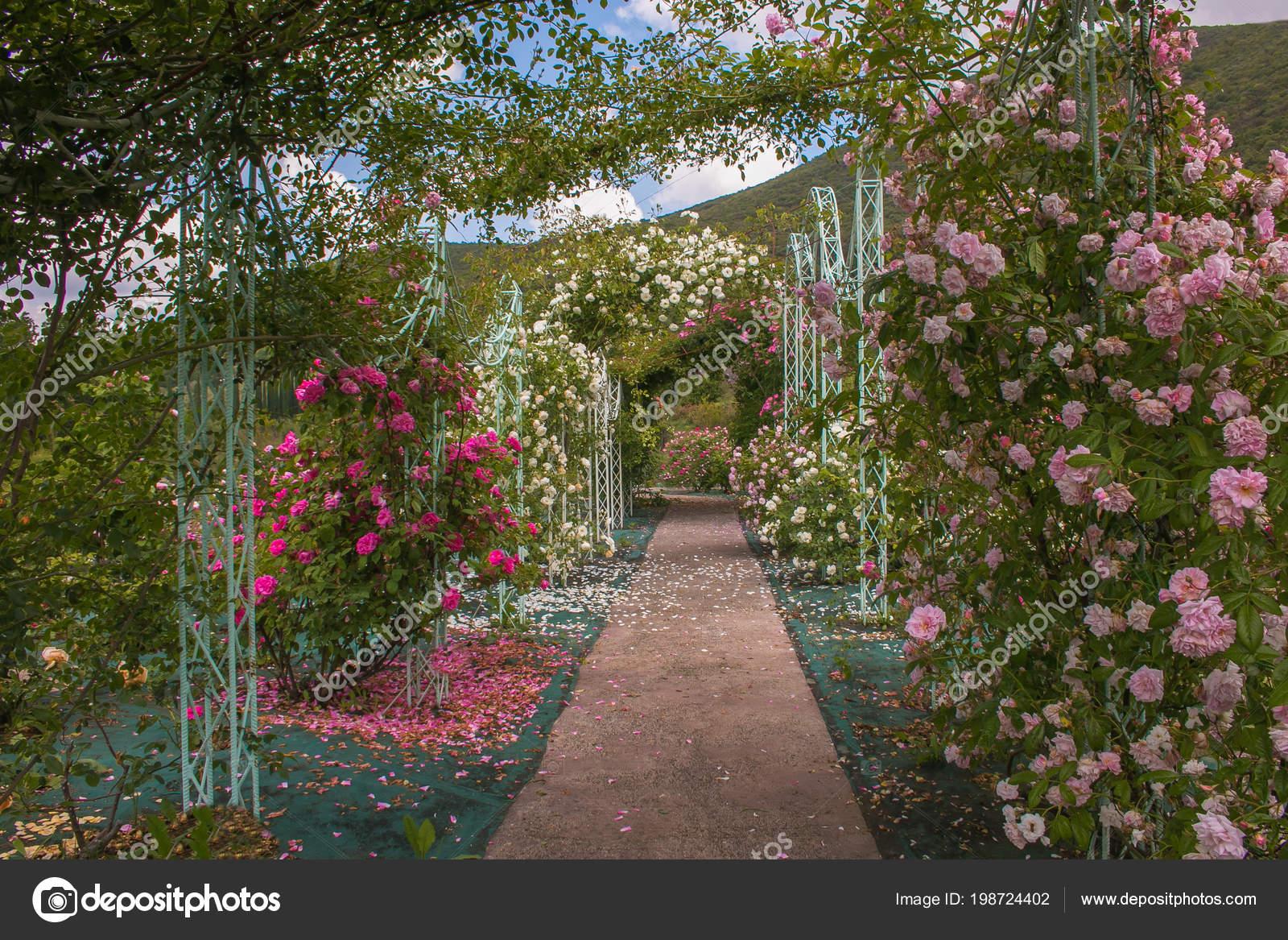 Belle Arche Avec Des Roses Dans Jardin Romantique ...