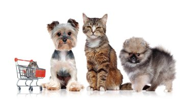 A group of domestic pets in a white studio