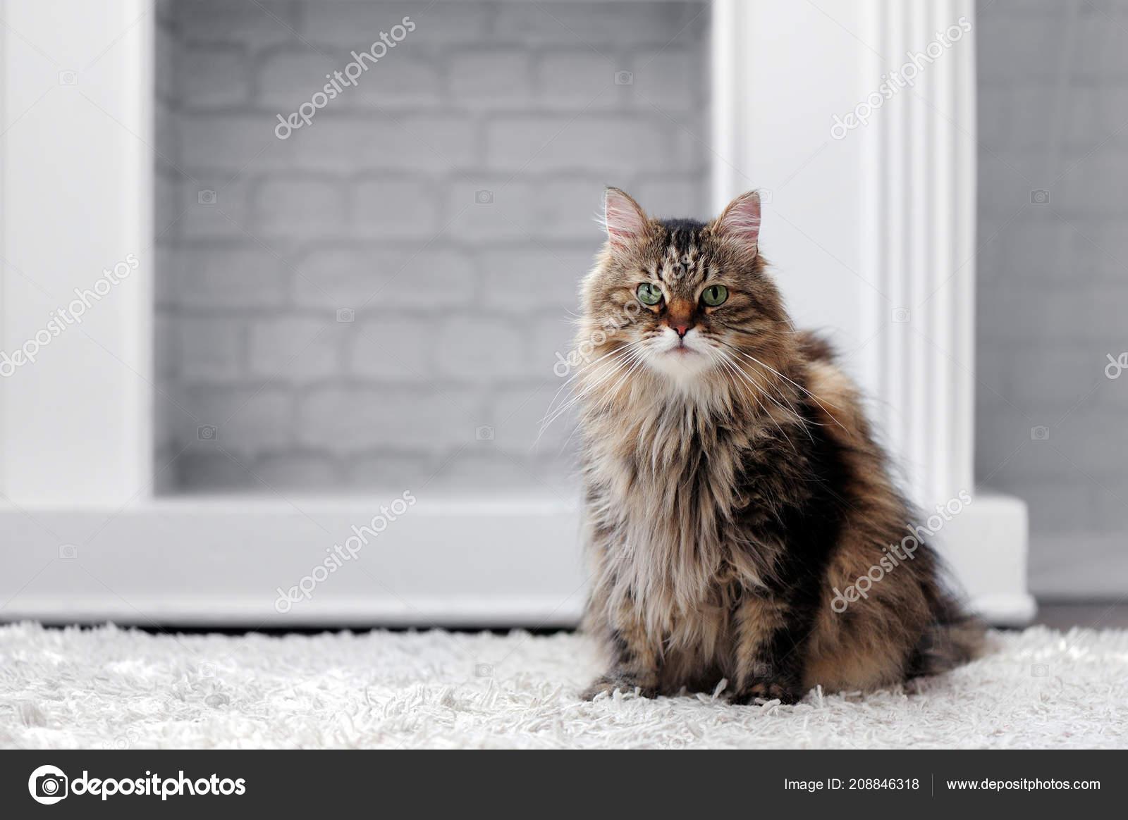www velký chlupatý kočička com stříkat dospívající lesbičky
