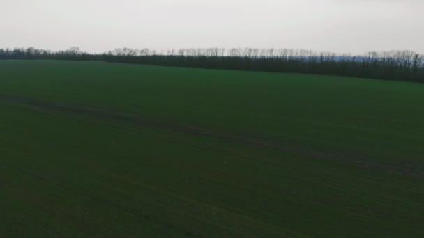 Letecký pohled od DRONY. Panorama z pole zelené údolí v zatažené deštivý den. Podzimní krajina. Krásné přírodní scéna