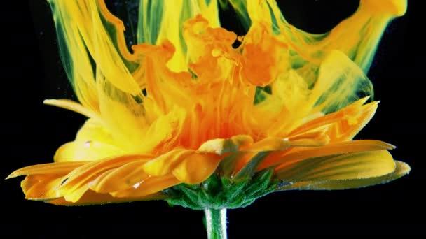 Žlutý květ pod vodou s zeleným inkoustem reagovat a vytvářet abstraktní oblačnosti. Lze použít jako přechody, přidán do moderních projektů, umělecká pozadí.