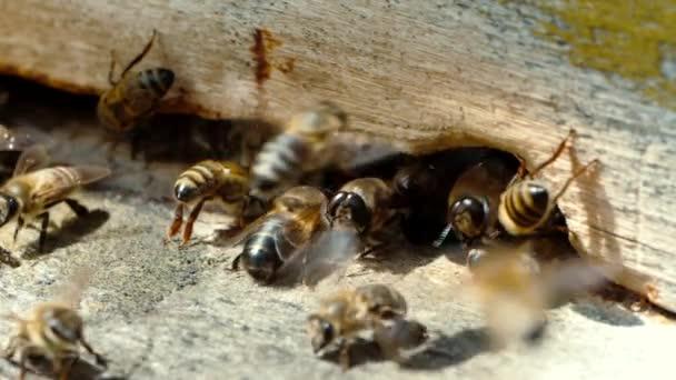 Méhészet. Méhek dolgoznak, hogy virágos nektár és a pollen a kaptár, hozzon létre édes mézet. Makrófelvételek