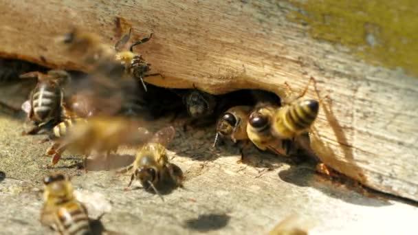 Imkerei. Bienen arbeiten, bringen Blütennektar und Pollen in den Bienenstock, erzeugen süßen Honig. Makroaufnahmen