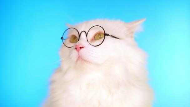 Aranyos házi kisállat kerek átlátszó üvegek. Szőrös macska a kék háttér a stúdióban. Állatok, oktatás, tudománykoncepció.