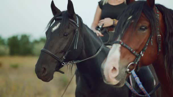 Close-up portrait of horses. two harnessed mares stand while their riders sit astride and communicate Farm animal, sport concept