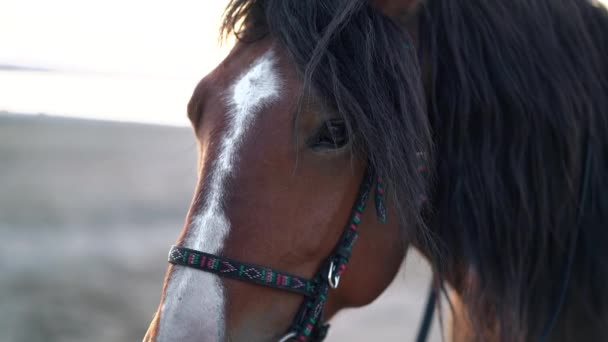 Close-up portrait of brown beautiful harnessed horse. Farm animal, sport concept.