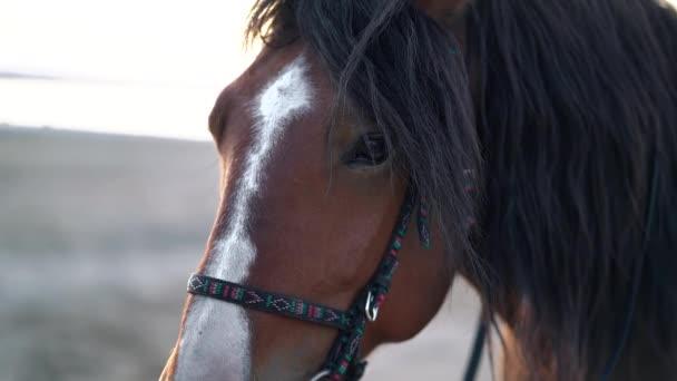 Blízký portrét hnědého nádherného koně. Hospodářská zvířata, sportovní koncepce.