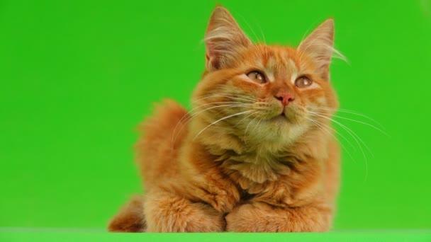 kočka vypadá nahoru a dolů na zelené obrazovce. Zvuk