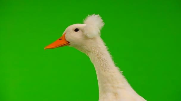 μεγάλο πουλί ασιατικό βίντεο σέξι παλαιότερα πορνό