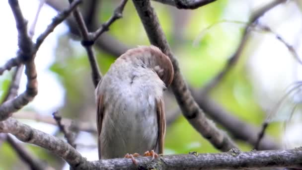 singing nightingale on a tree branch, sound