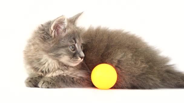 Kätzchen spielt mit Ball für Kätzchen auf weißem Bildschirm