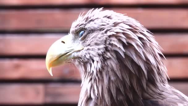 Portrét orla na hnědém pozadí.