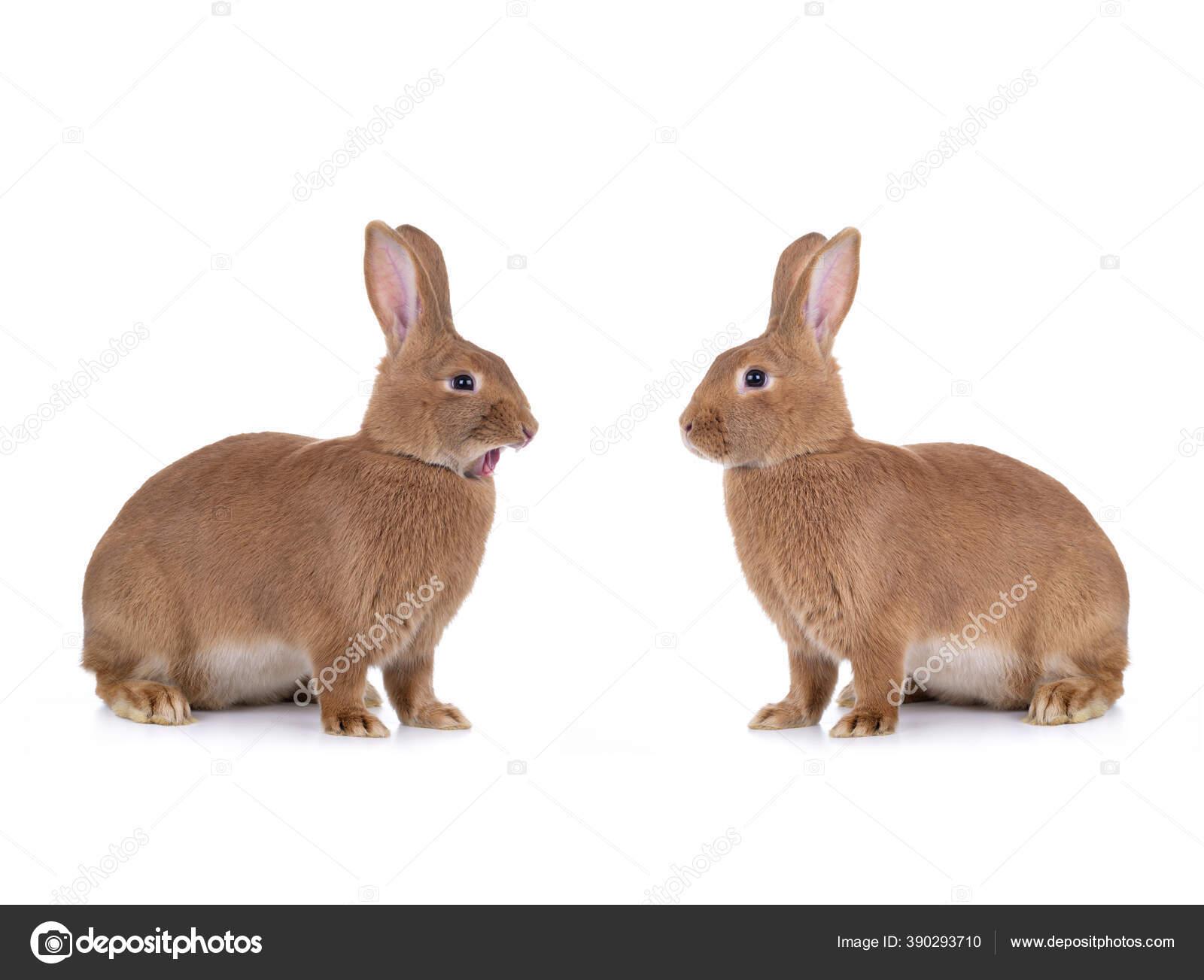 сама создала два кролика сидят друг на друге картинки относятся ленточным червям