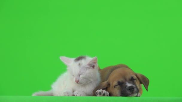 Přátelé kočka a pes spát na zelené obrazovce.