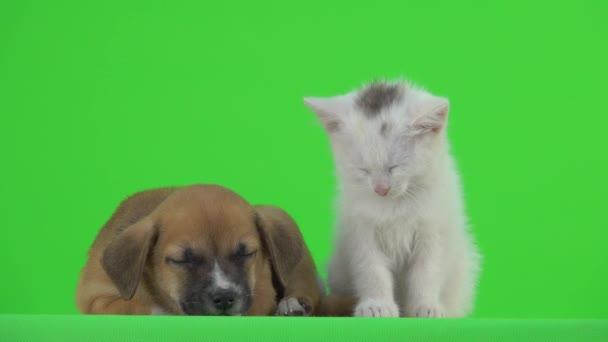 Usínající bílá kočka a hnědé štěně na zelené obrazovce.