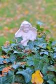 Fotografie Das Bild wurde auf dem alten Kloster Friedhof in der alten Stadt Straubing aufgenommen. Das Foto zeigt eine Porzellan-Statuette eines Engels stehen in das Dickicht des Efeus