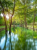 Fotografie Krásný rybník v parku, úžasné krajiny letní přírody, velké stromy s čerstvé zelené listy rostoucí z vody, úžasné krásy divoké přírody