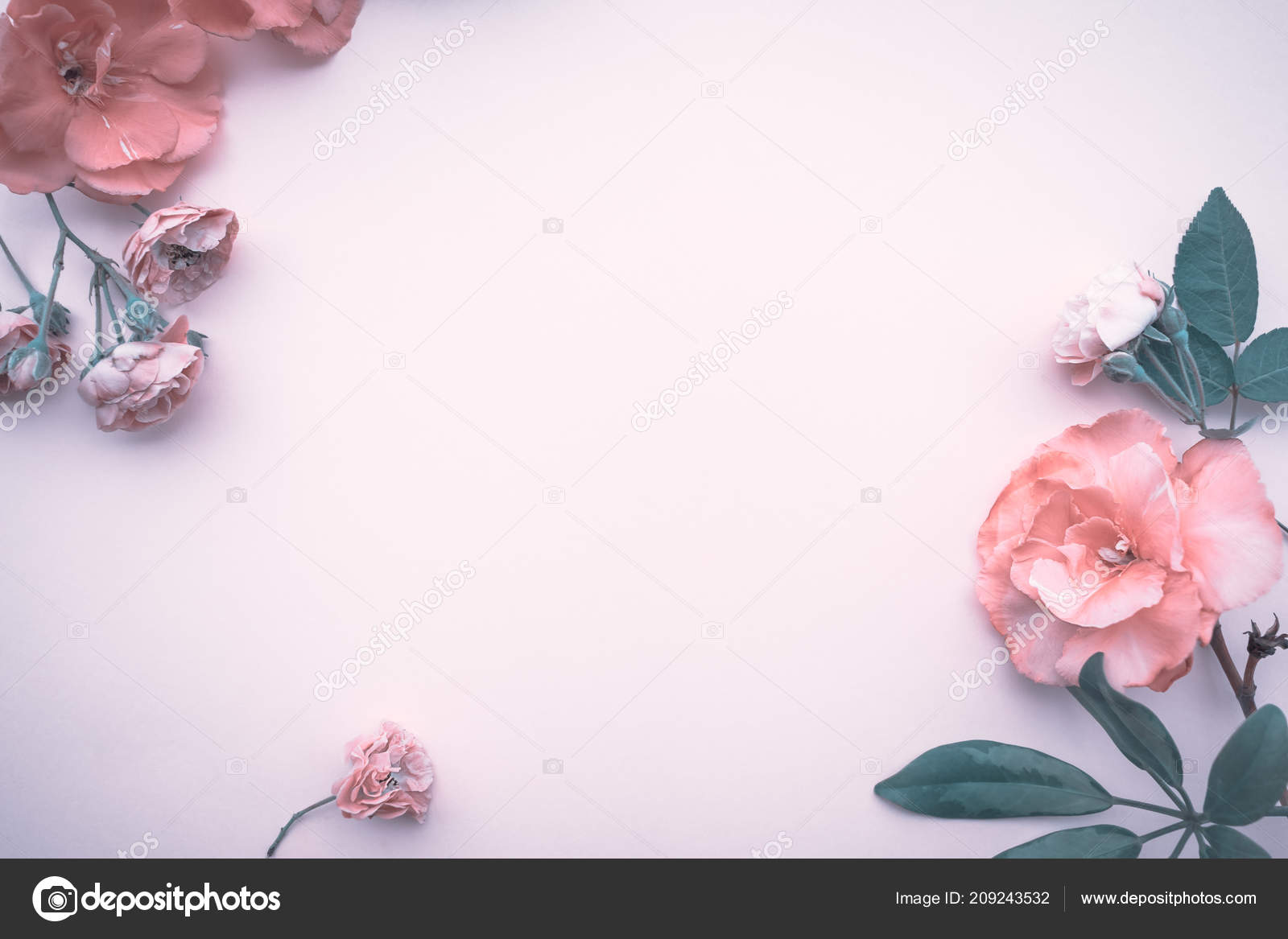 Baby Pink Roses Wallpaper Gentle Floral Border Abstract