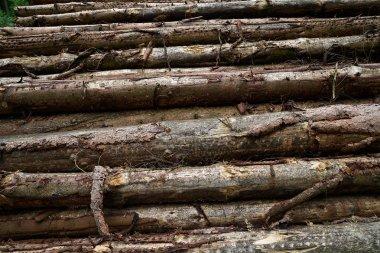 """Картина, постер, плакат, фотообои """"деревянные бревна, сложенные в горах гарц в германии """", артикул 196688086"""