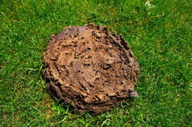 cow poop shit in a green meadow turf grass