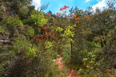 Espadan Sierra forest in Castellon of Spain