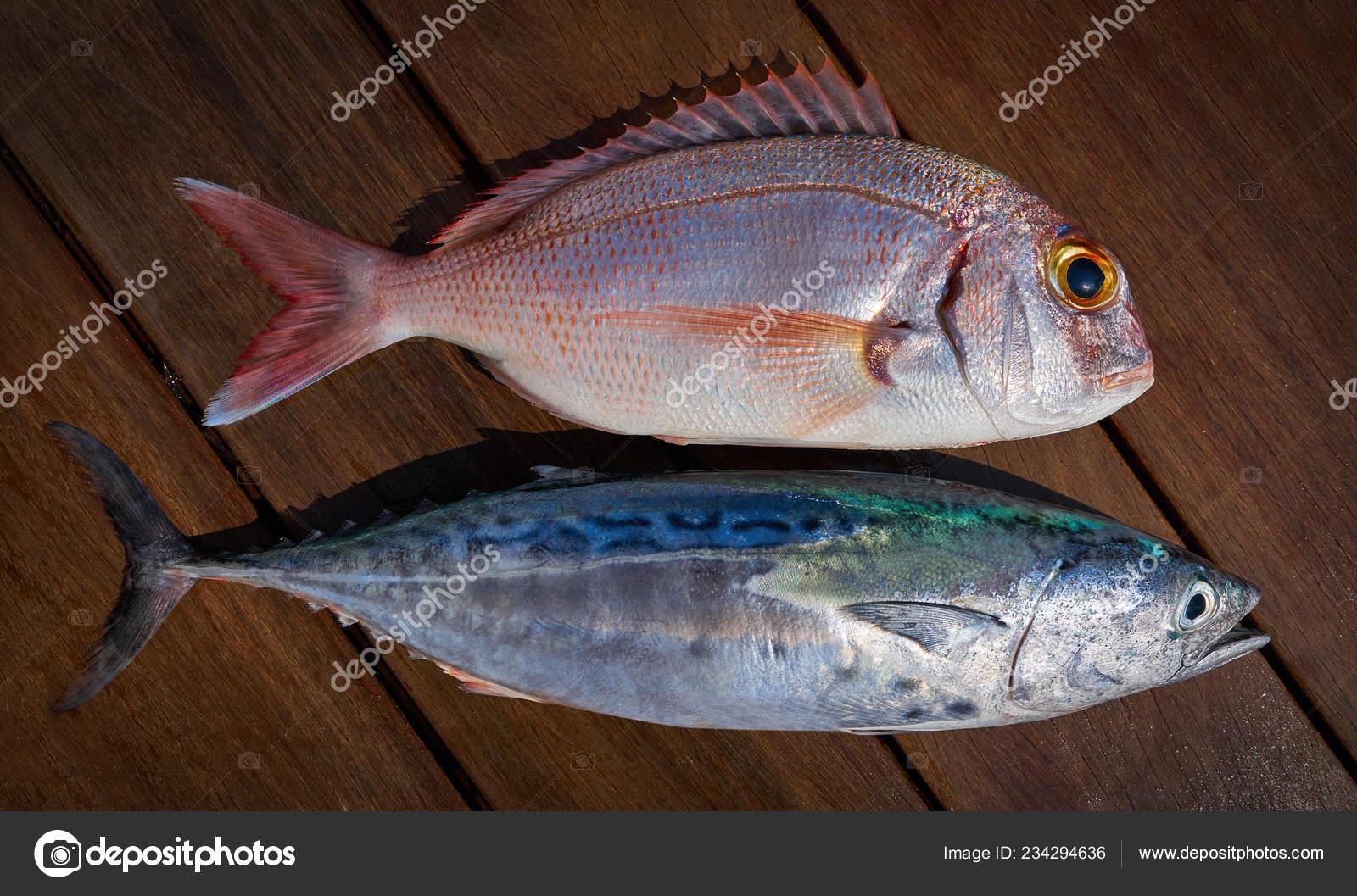 Snapper Fish Little Tunny Tuna Fish Catch Wooden Board