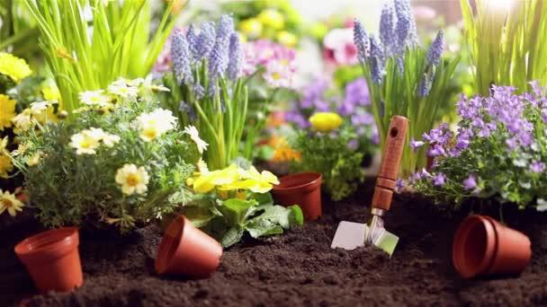 Zahradní nářadí a květiny. Koncept zahradnictví
