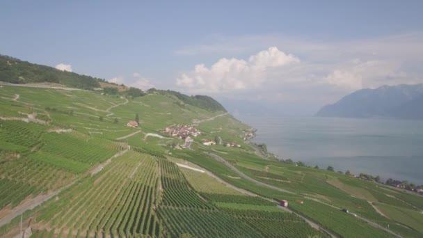 4 k osztályozatlan légifelvételek Vineyard mezők Terrasses de Lavaux közelében Lausanne, Svájc - Uhd
