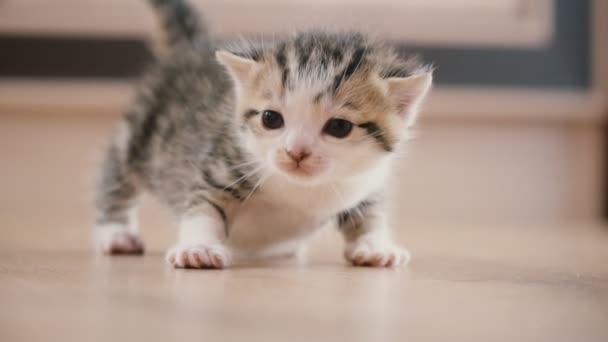 a kis cica séták