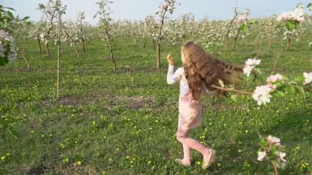 little girl walks around the apple orchard