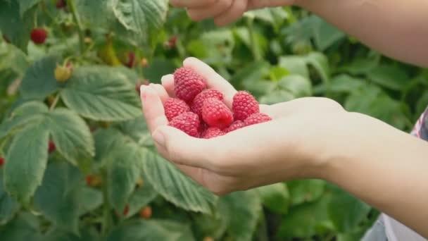 assembly raspberries closeup