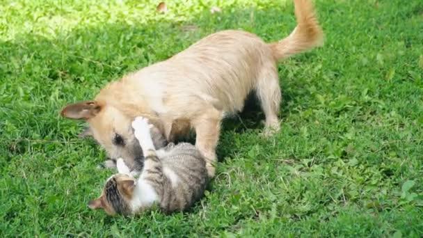 Bitva o psa a kočku